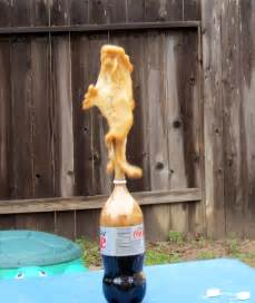 Diet Coke and Mentos Science Project