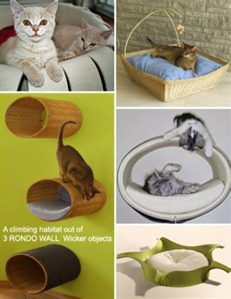 day beds  furniture  cats  set  design