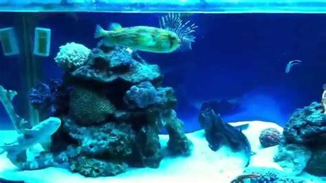 my sharks and home aquarium feeding time