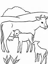 Cow Coloring Pages Animals Printable Mycoloring sketch template