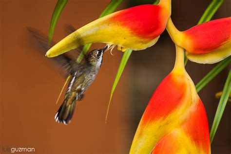 pure cane sugar for hummingbirds sugar