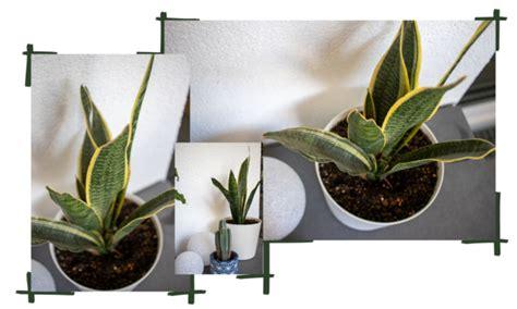 pflanzen fuer anfaenger pflegeleichte gruenpflanzen fuer