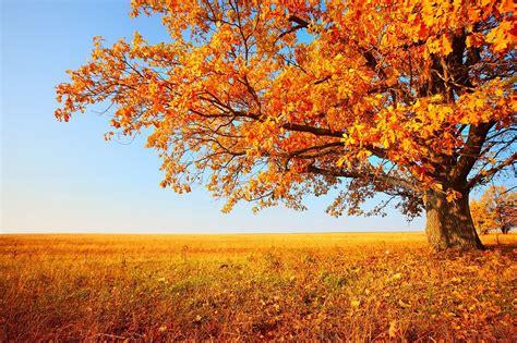 Iemūžini rudeni skaistās fotogrāfijās