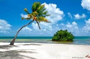 Beach Palm Tree Florida Keys