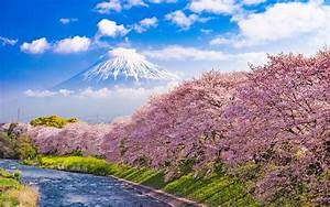 Cherry, Blossoms, In, Japan, Urui, River, And, Mount, Fuji, In