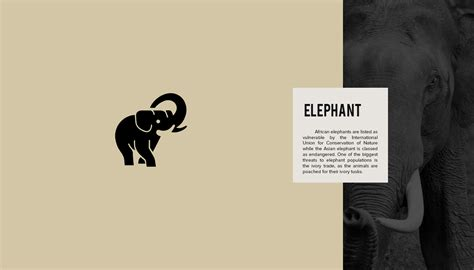 designers create series  beautiful animal logos  raise