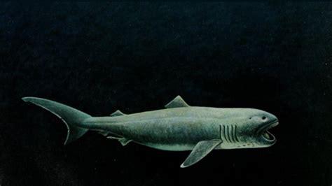facts   megamouth shark mental floss