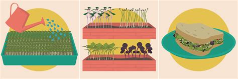 grow your own microgreens how to grow your own microgreens an illustrated guide