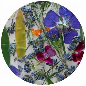 Garden Activities- Pressed Flowers And Leaves