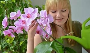 Trockene Luft Im Schlafzimmer : pflanzen gegen trockene luft im schlafzimmer ~ Lizthompson.info Haus und Dekorationen