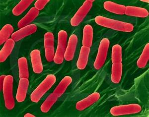 10 Interesting Eubacteria Facts | My Interesting Facts
