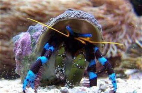 bernard l hermite aquarium eau douce articles de disneypixar73 tagg 233 s quot eau de mer quot aquarium color skyrock