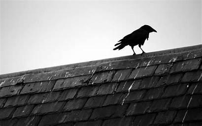 Raven Backgrounds Animal Rooftop Phone Desktop Wallpapers
