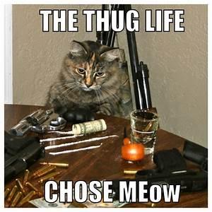 Trap Cat Cat Funny Guns Badass Meme Love
