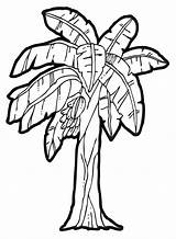 Tree Coloring Banana Drawing Clip Clipart Popular sketch template