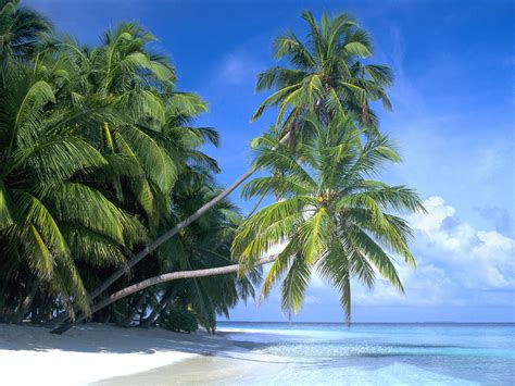 coconut island nostalgic maldive islands travel guide and travel info
