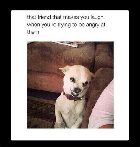 Puppy Face Meme - funny dog face meme daily funny memes