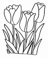 Peony Line Drawing Coloring Clipartmag sketch template