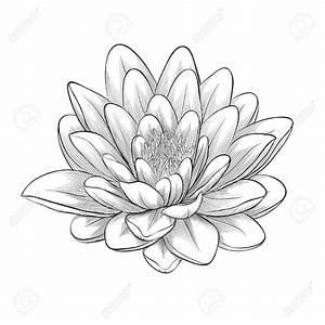 Bilder Schwarz Weiß Gemalt : sch ne schwarz wei schwarz und wei lotusbl te in grafik stil isoliert auf wei em hintergrund ~ Eleganceandgraceweddings.com Haus und Dekorationen