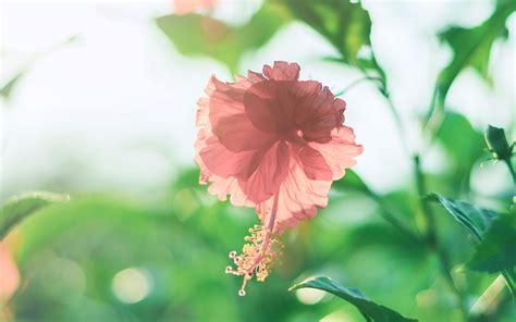 护眼小清新绿色植物高清电脑桌面壁纸图片_桌面壁纸_mm4000图片大全