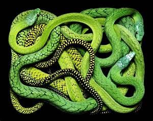 Guido mocaficos magnificent rectangular serpents colossal for Guido mocaficos magnificent rectangular serpents