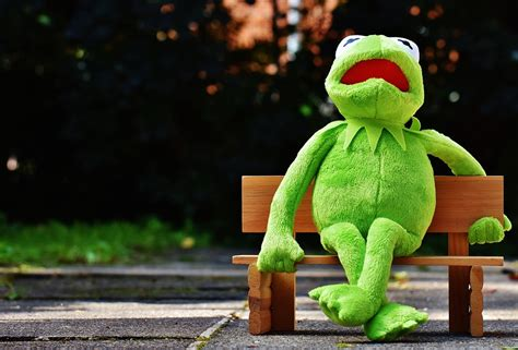 Free Stock Photo Kermit Frog Bank Rest Sit Fig