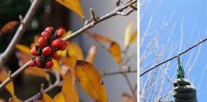Comment Tailler Les Orchidées Pour Qu Elles Refleurissent : magnolia quand et comment tailler promesse de fleurs ~ Melissatoandfro.com Idées de Décoration