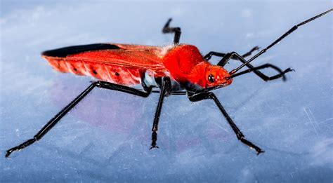 Gambar : serangga, fauna, invertebrata, merapatkan ...