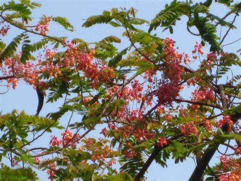 flower tree summer flower summer flowering trees