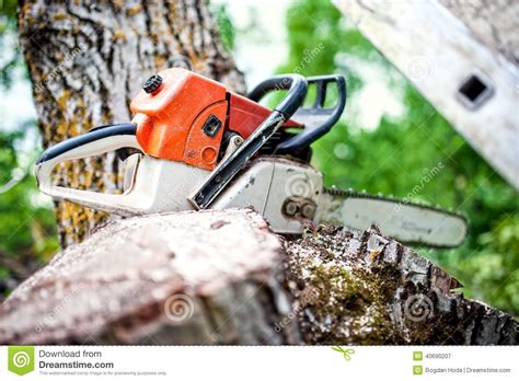 Pile Of Fresh Cut Wood Royalty-free Stock Photo