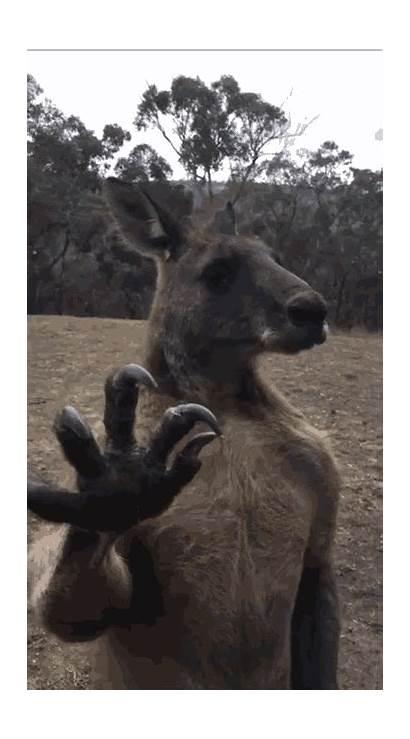 Kangaroo Ripped Sinister Terrifying Inside Stuff Animals
