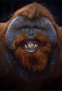 Best 25+ Ugly monkey ideas on Pinterest   Ugly animals ...