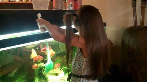 how to clean a fish tank how to clean a fish tank aquarium remove algae fish care part 2 youtube