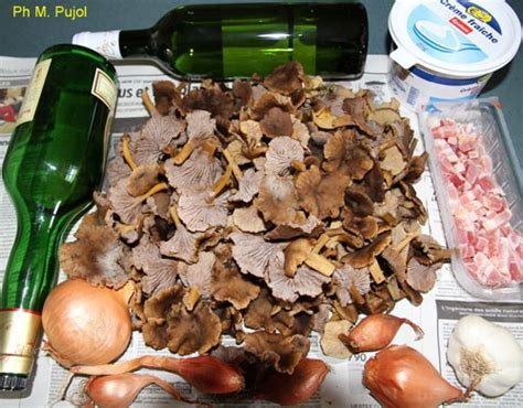 cuisiner la chanterelle chignons toute l ée des chanterelles à cuisiner