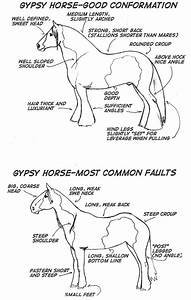 Conformation In The Gypsy Horse