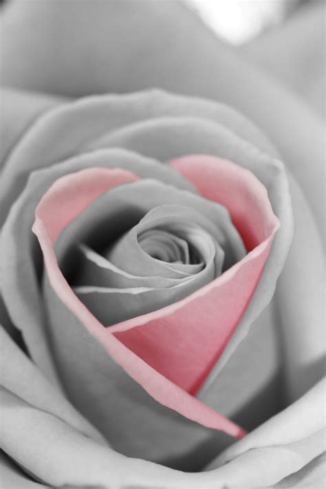 51 Best Images About Pink And Grey On Pinterest Grey