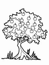Oak Tree Line Drawing Draw Clipartmag Trees sketch template
