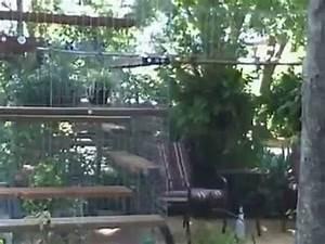 Maison Pour Chat Extérieur : enclos pour chat ext rieur habitat haven chatterie cage ~ Premium-room.com Idées de Décoration