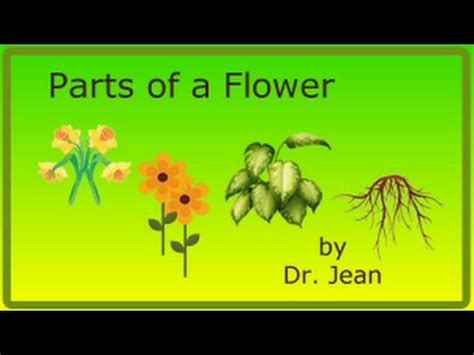 Parts Of A Flower By Dr Jean Youtube