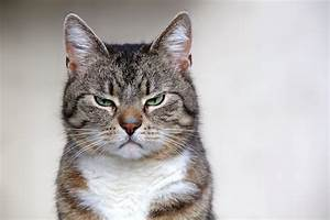Capiamo davvero il linguaggio dei nostri gatti? Gli