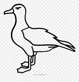 Albatross Coloring Printable Clipart Mating Outline Pinclipart Kittiwake Drawing sketch template