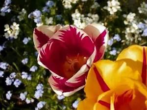 Schöne Bilder Kaufen : sch ne natur bilder slideshow beautiful nature pictures youtube ~ Orissabook.com Haus und Dekorationen