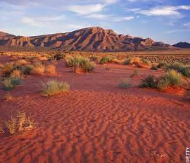 1000+ images about Desert on Pinterest | Desert animals ...