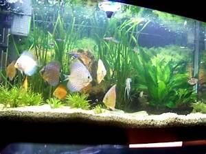My Fish Tank Discus Angels Cardinal Tetras Corydoras