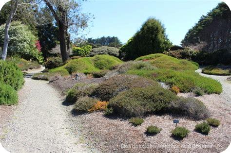 mendocino coast botanical gardens rhododendrons at mendocino coast botanical gardens