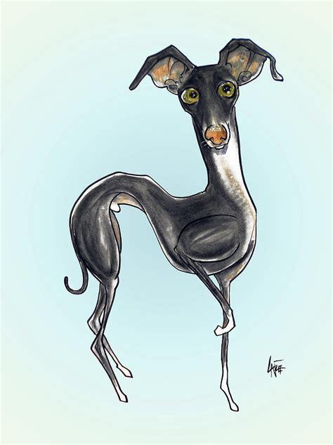 foto de Italian Greyhound Drawing by John LaFree