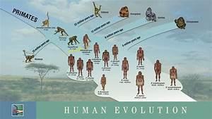 Human evolution, Evolution and Timeline on Pinterest