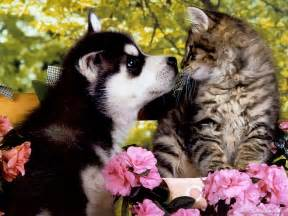 puppy cat beautiful flower wallpapers for you kitten puppy wallpaper