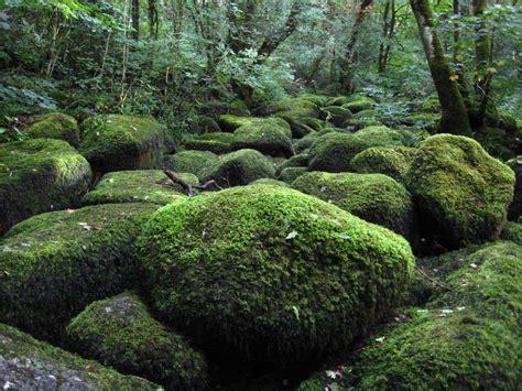 Dartmoor National Park - leticia hughes