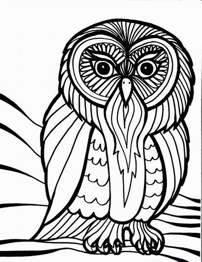 Owl Coloring Outline Cool Pages